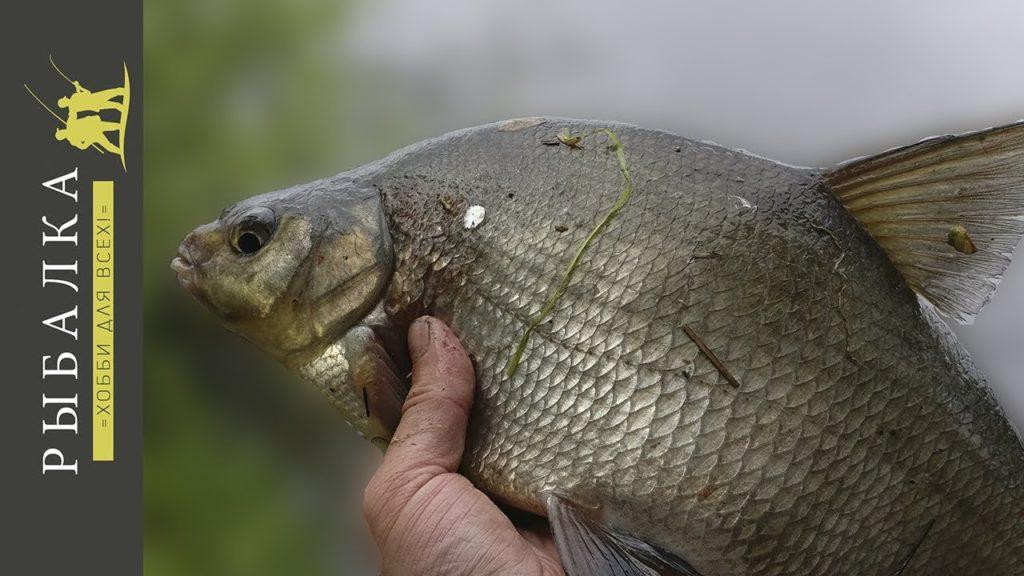 Рыбалка на фидер на реке Свирь