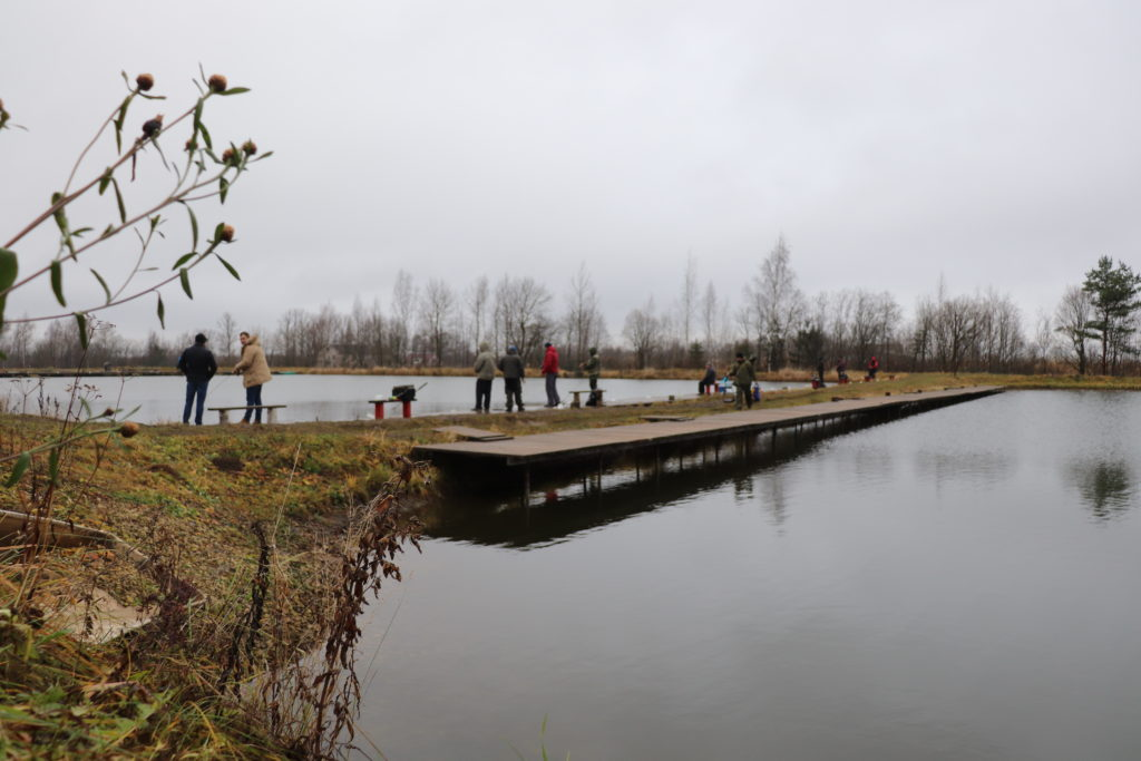 Рыбные пруды - Ропша