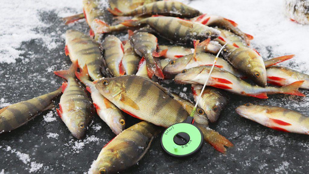 Зимняя рыбалка на карьере, окунь
