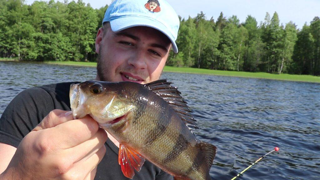 Окунь в руках у рыболова